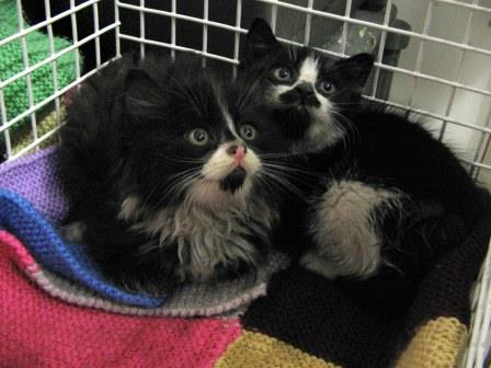 Two kittens dumped at Christmas rehomed by Friends of the Animals